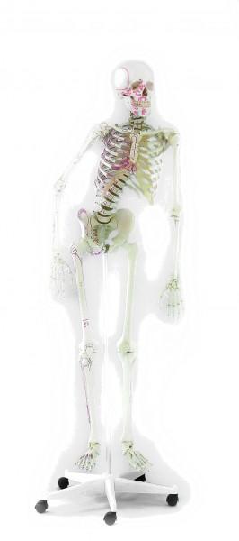 """Skelett """"Peter"""" 176 cm, 9,5 kg"""
