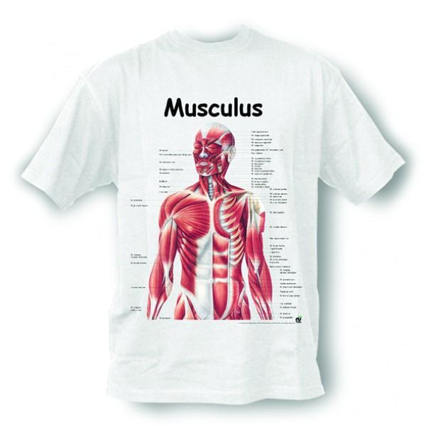 Anatomisches T-Shirt · Musculus